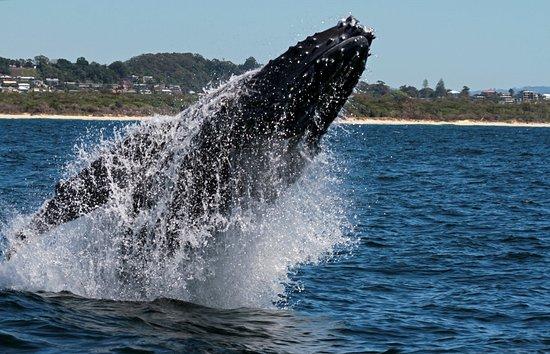 Foto de Coolangatta Whale Watch