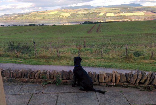 Culbokie, UK: Ria, waiting patiently for someone to play ball with her. This was a view from the dining room.