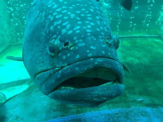 Samui Aquarium and Tiger Zoo: photo1.jpg