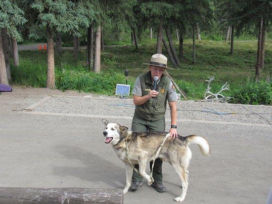 Sled Dog Demonstration Photo