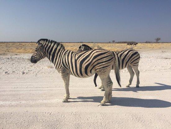 Etosha National Park - zebra crossing