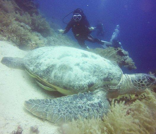 Alona Divers