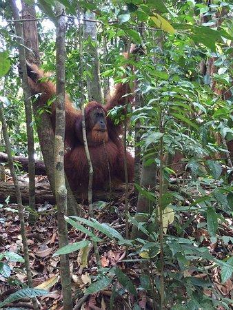 Sumatra Orangutan Treks