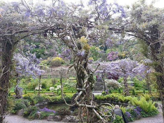 Bantry House & Garden: Trädgården