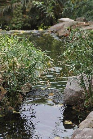 Botanical Garden Of Eilat : צילום של אלכסנדר שפירו