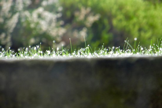 The Waltons: View from the window - dew on the grass.