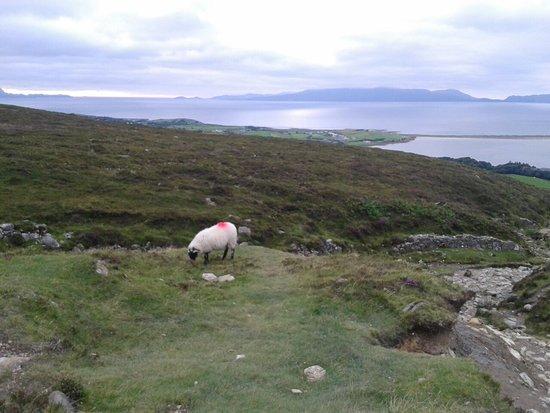 County Mayo, Irland: 20160814_192922_large.jpg