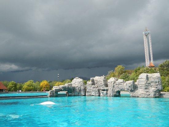 Killer Whale - Picture of Marineland, Niagara Falls ...