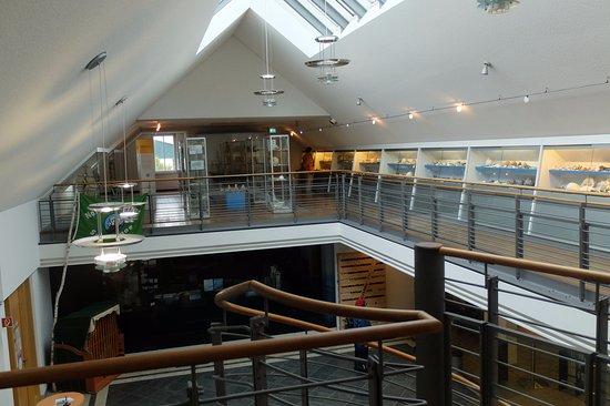 Kurioses Muschelmuseum in der Kogge