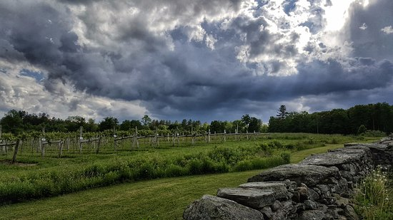 Proctorsville, VT: Looking out over the vineyard