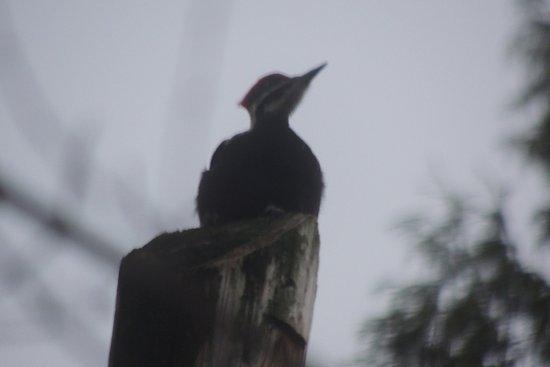 พอร์ตโคควิทแลม, แคนาดา: Bird at a diatance