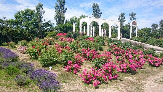 Haboro Rose Garden