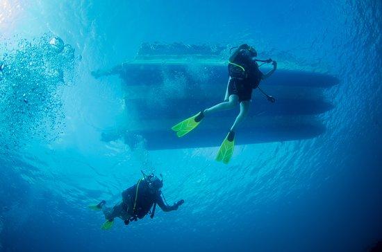 """""""Bonaire's diving is 24/7"""""""