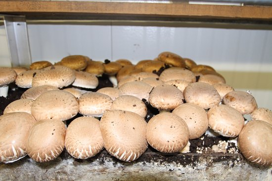 The Woodlands at Phillips: The mushroom growing exhibit in the museum.