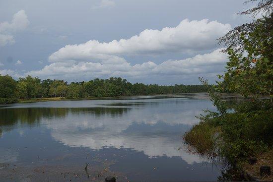Hammonton, NJ: Wharton State Forrest