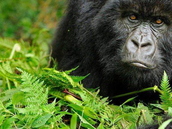 Explore RwandaTours