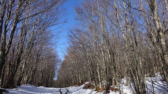 Monghidoro, Italie : passeggiate nei boschi