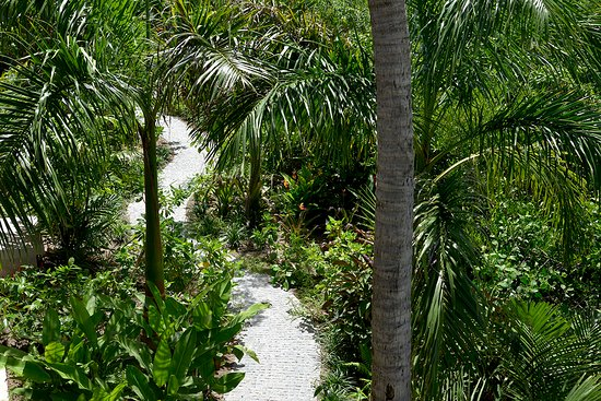Grand Cul-de-Sac, Saint-Barthélemy: Tropical garden