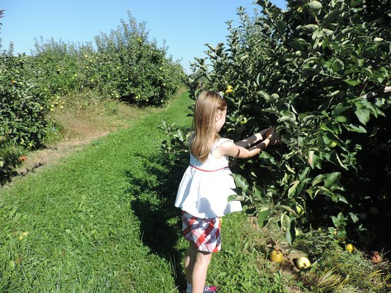 Swanton, Огайо: Enjoying the abundance of apples!