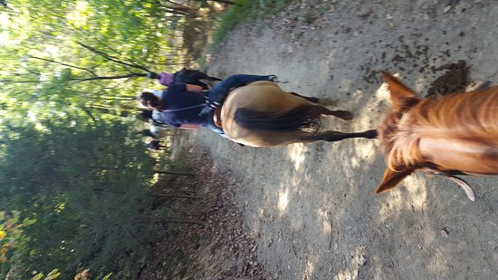Five Oaks Riding Stables: Riding the trail