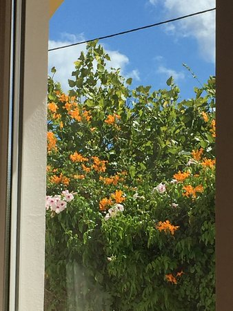 Espiche, Portugal: View from patio doors