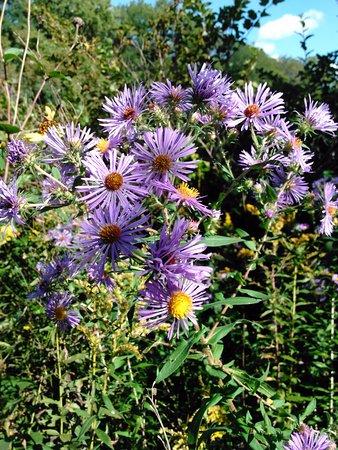 Dubuque, IA: Pretty Meadow Flowers