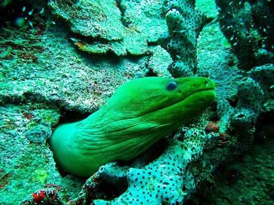Speyside dives