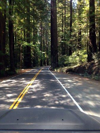 Weott, Californië: A beautiful drive.