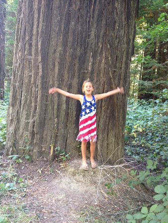 Weott, Californië: Giants
