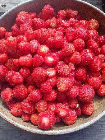 Haute-Savoie (bölge), Fransa: de belles fraises pour un bon coulis aux fruits rouges