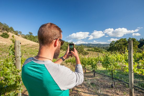 The vineyards of Calistoga