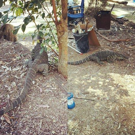 Durras North, أستراليا: IMG_20161002_132827_large.jpg