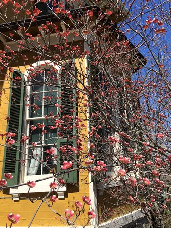 Aurora, IN: Springtime blossoms near one of Hillforest's bay windows