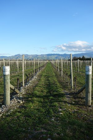 Marlborough Vintners Hotel Heritage Boutique Collection: View of Vines from rear of property