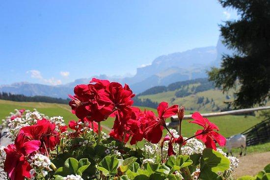 Hotel Dolomiti Madonna: La bellezza della natura di Ortisei