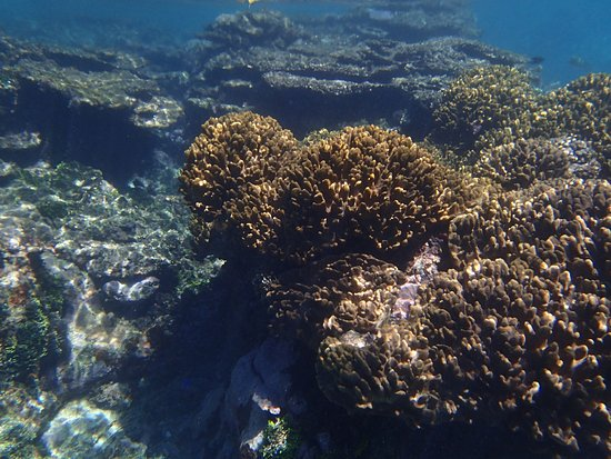 Oyster Island Resort: corals at one of snorkeling spots, resurrecting after cyclone