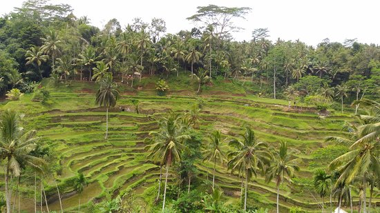 Bali Great Island