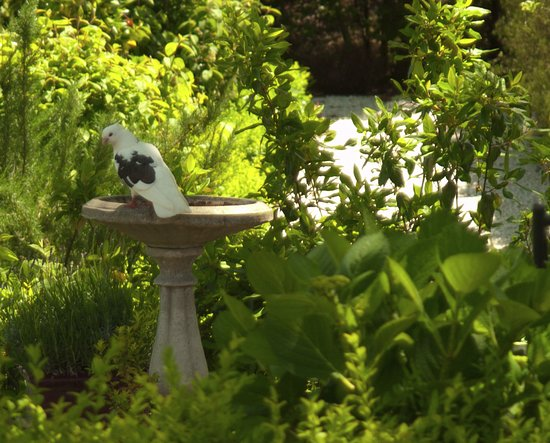 Renwick, Nueva Zelanda: A visitor to the bird bath