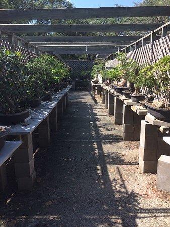 Central Texas Bonsai Exhibit at Jade Gardens: photo0.jpg