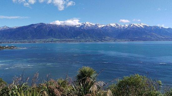 Kaikoura, Nueva Zelanda: IMAG2917_large.jpg