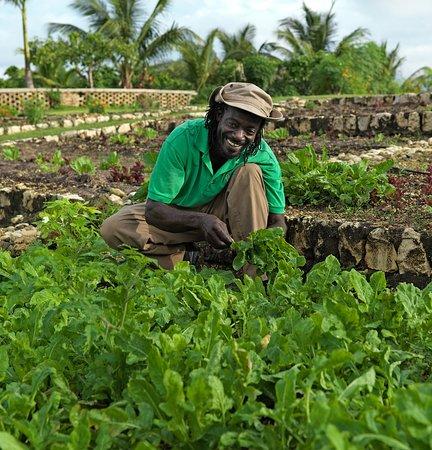 Hopewell, Τζαμάικα: Organic Vegetable Garden
