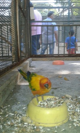 Alger, Argelia: طائر جميل