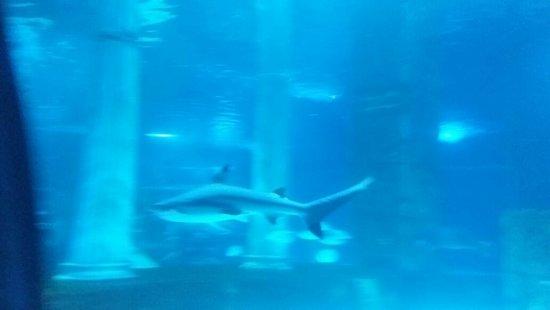 Köpek balığı - Picture of Aqua Vega Aquarium, Ankara ...