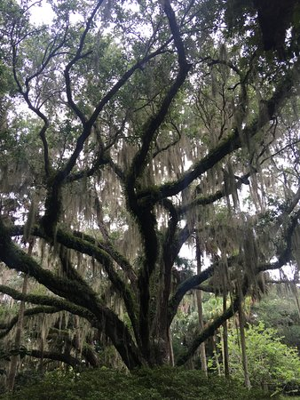 Washington Oaks Gardens State Park 사진