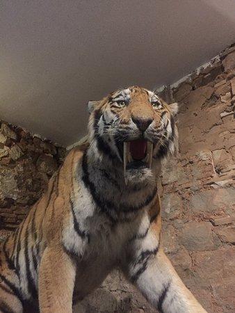 leeds speed dating tygr tygr zajímavé věci na seznamovací stránce