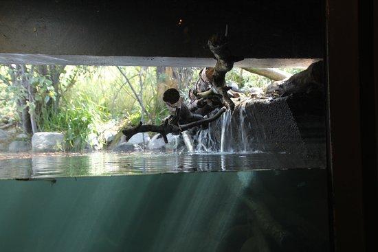 Σάουθ Λέικ Ταχόε, Καλιφόρνια: Stream Profile Chamber