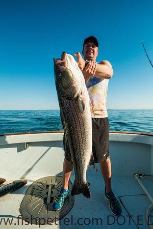 วอเทอร์ฟอร์ด, คอนเน็กติกัต: Great Striped Bass fishing in June!