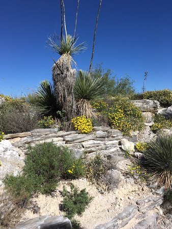 Picture Of Living Desert Zoo And Gardens State Park Carlsbad Tripadvisor