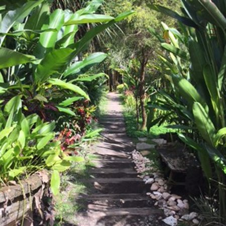 The Yoga Barn Guest House: Pathway to the guest houses from the studio