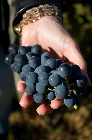 Winery Plus Tours : Old grape variety from old vines.